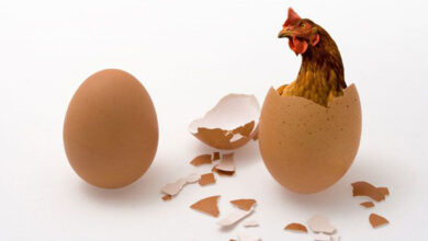 Photo of The Chicken came before the Egg